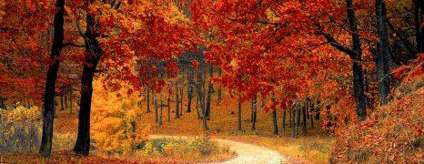 Képek a kékestetői őszi OT ülés, és képzésről