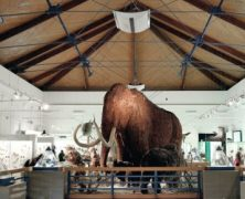 A KKDSZ a Természettudományi Múzeumért